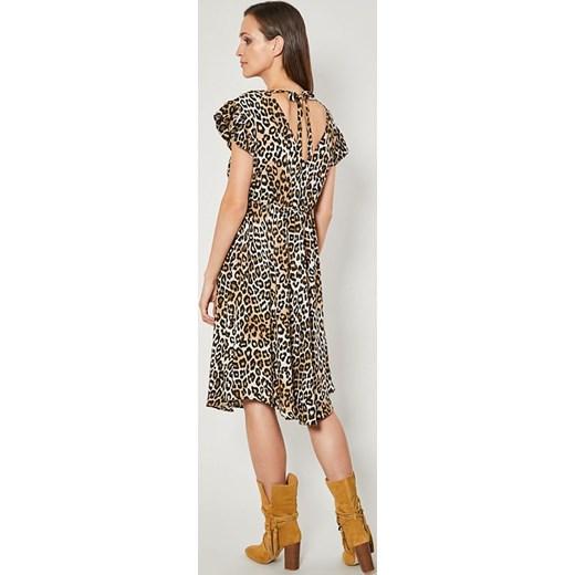 676bbf525a Sukienka w zwierzęcy wzór midi w Domodi